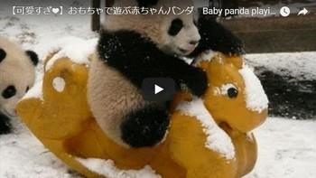 赤ちゃんパンダ.jpg
